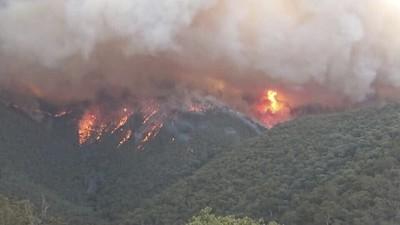 澳洲野火「燒掉一個南韓」面積 傷亡動物超過10億隻