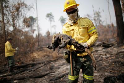 亞馬遜雨林7月起火次數增加28% 巴西總統辯稱「謊言」